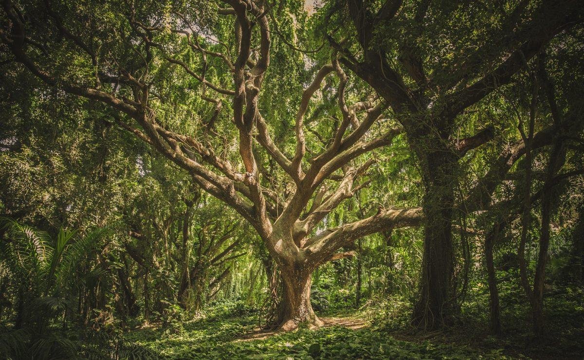 Handle Stress Like a Tree