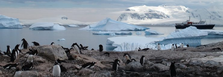 Large penguin colony in Antarctica