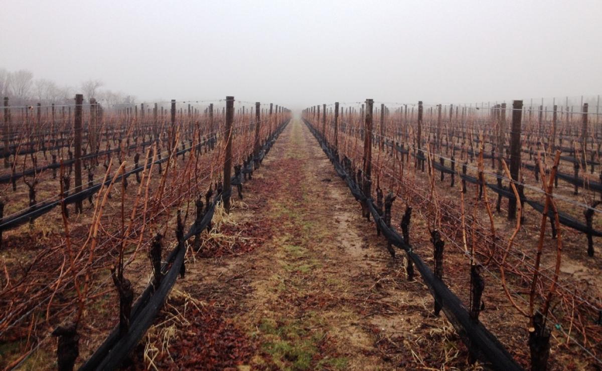 Long Island, New York, Wine