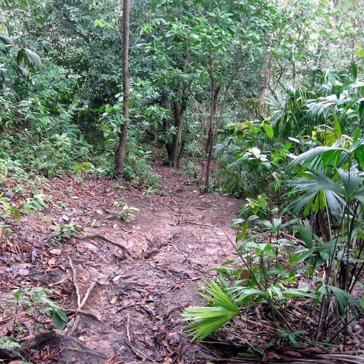 Jungle Path Through the Darien Gap