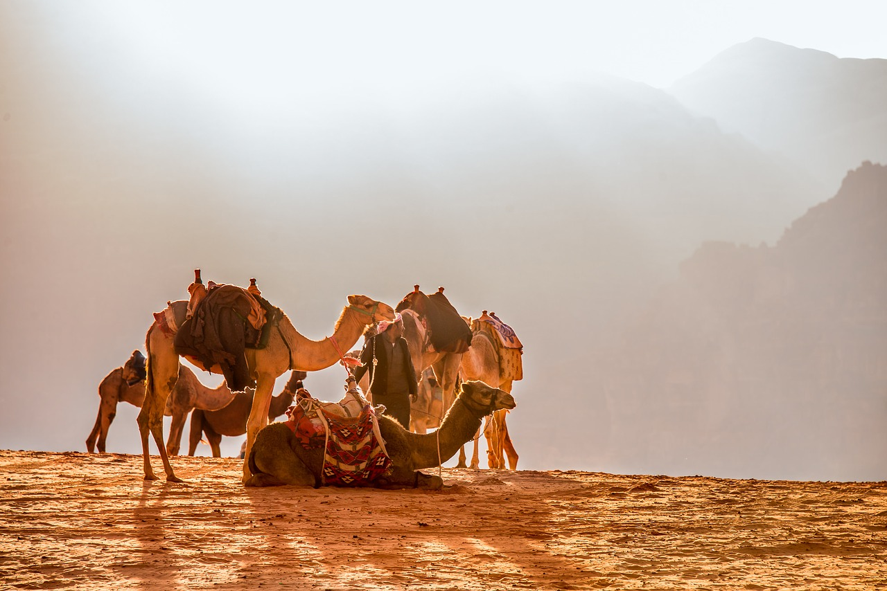 Camels in the Jordanian Desert