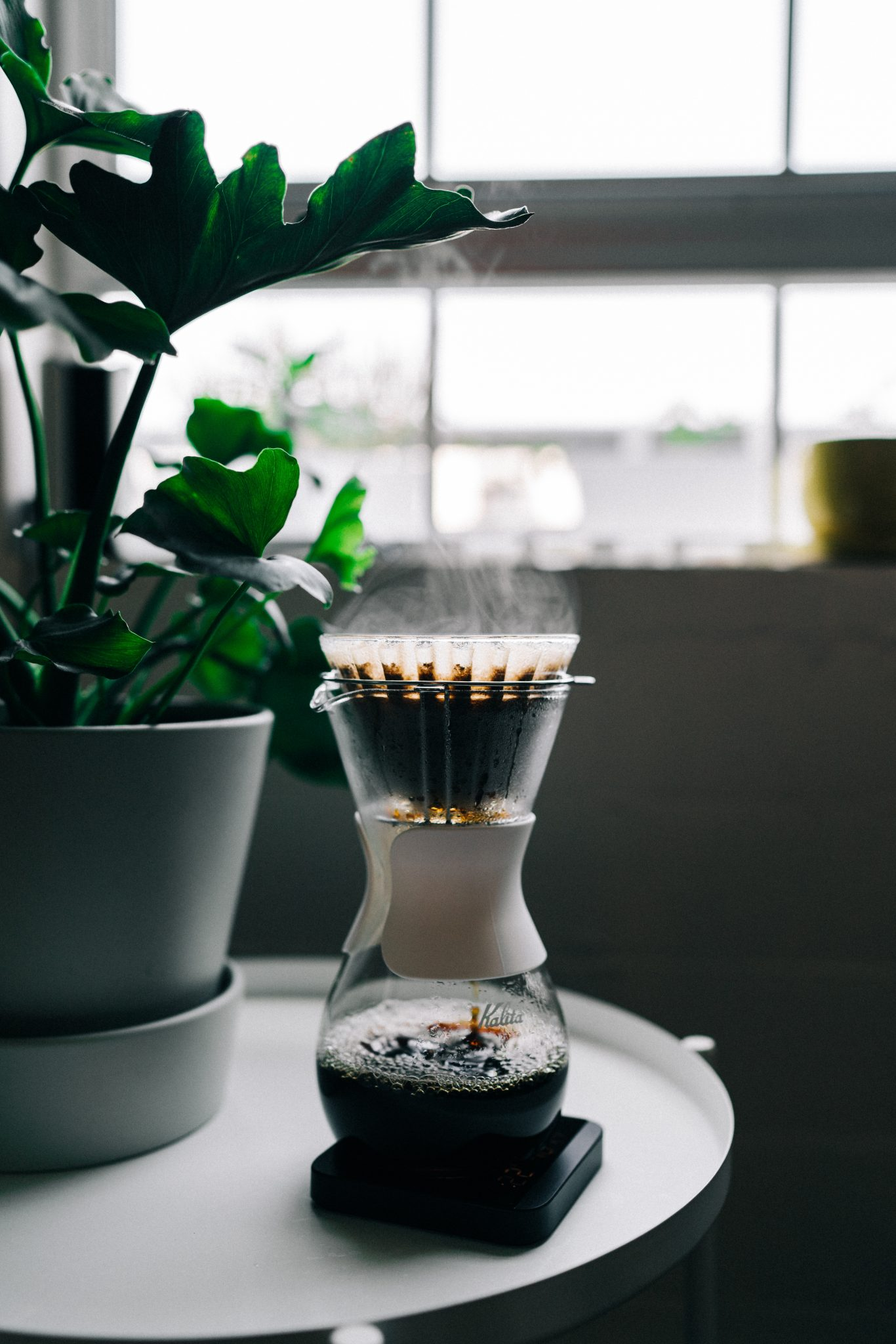 Brewing Your Own Coffee turned on black and grey coffeemaker near green leaf plant
