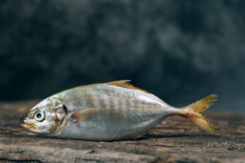 silver fish Fishing Gear