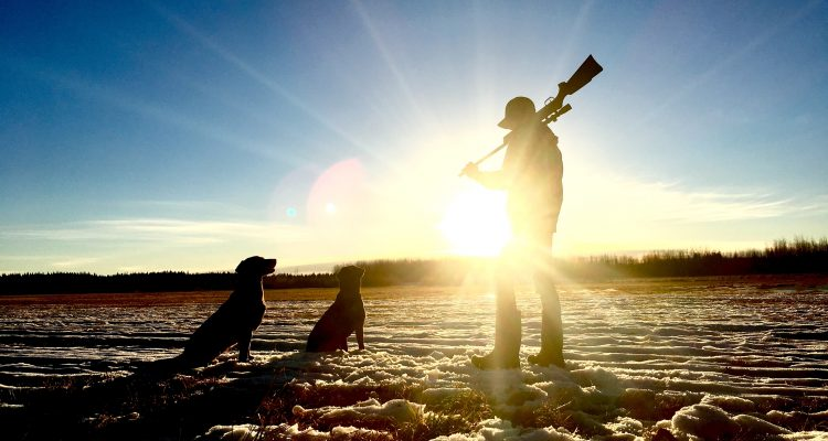 Hunting man standing holding rifle in front of dogs during daytime